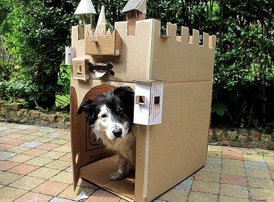 Hond in een kartonnen kasteel