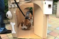 Een vreemde hond in mijn kasteel?