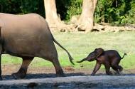 Kleine olifant achter moeder
