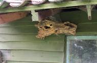 Boomstronk als vogelhuisje